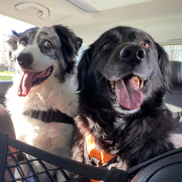 Photo of Mina and Clem in the car.
